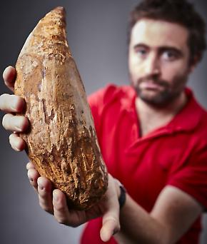 Dr Erich Fitzgerald with the fossilised extinct sperm whale tooth.