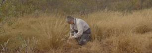 Tim Inglis searching for B. pseudomallei in the Kimberley.