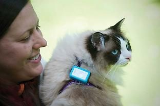 Heidy Kikillus and a cat fitted with a GPS unit and harness to record its wanderings as part of the Cat Tracker project.