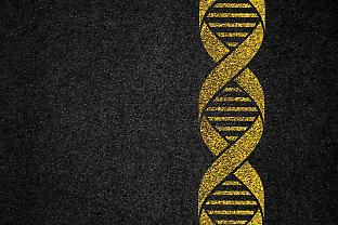 Gene Drives: A Fork in the Road for the GMO Debate