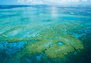 Image of reef