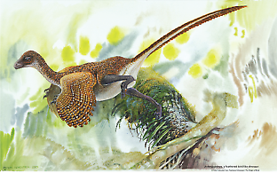 © Peter Schouten from Feathered Dinosaurs: The Origin of Birds
