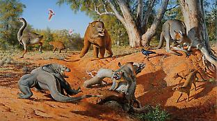 An artist's reconstruction of some extinct Australian animals (clockwise from top left): Genyornis newtoni, Diprotodon optatum, Procoptodon goliah, the thylacine (which survived in Tasmania until 1936), Thylacoleo carnifex (the biggest marsupial carnivore) and the giant lizard Megalania prisca. Image courtesy of the artist Peter Trusler and Australia Post