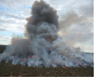 Fire is a key part of ecosystems in the Mallee. Credit: Peter Teasdale