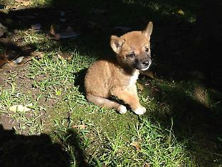 Sandy at 3 weeks of age. Credit: Barry Eggleton