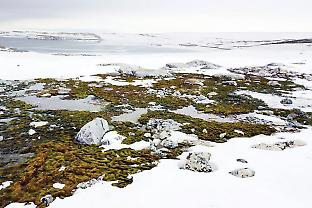 A green oasis of Antarctic mosses in the Windmill Islands. Zbyněk Malenovský