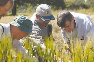 Robert Park (right) inspects wheat plots in Ethiopia.