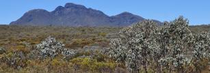 Heathland in the Stirling Ranges National Park