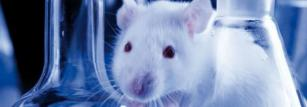 The invasive nature of embryo retrieval has necessitated the use of a mammalian