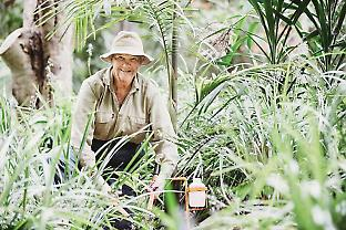Members of the Big Scrub Landcare Group have planted the key structuring species to restore areas of rainforest on land that had been cleared for farming, adding about 300 ha of habitat. Courtesy of Big Scrub Landcare
