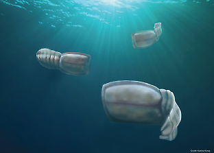 A school of vetulicolians swimming in the Cambrian ocean