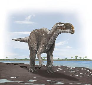 The large Lark Quarry footprints were made by a herbivorous dinosaur.