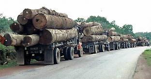 A queue of logging trucks in Southeast Asia. Credit: Jeff Vincent
